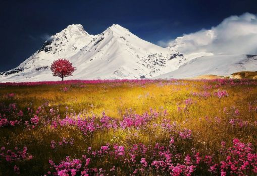 Autumn Fields.... Alps Mountains