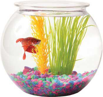 Pin by maura ames on yoveo pinterest for Fish bowl price