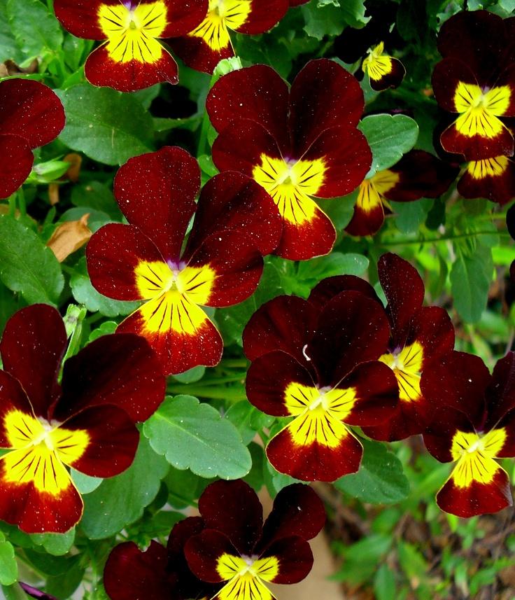 29 best Botanical Gardens images on Pinterest | Botanical gardens ...