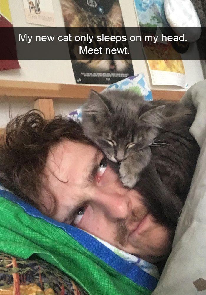 Hilarious-cat-snapchats #funny #cute #cat