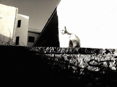 Athens in Art: White #cat #whitecats #blackandwhite