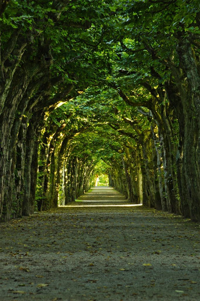 Tree tunnel at the Eremitage in Bayreuth / Germany
