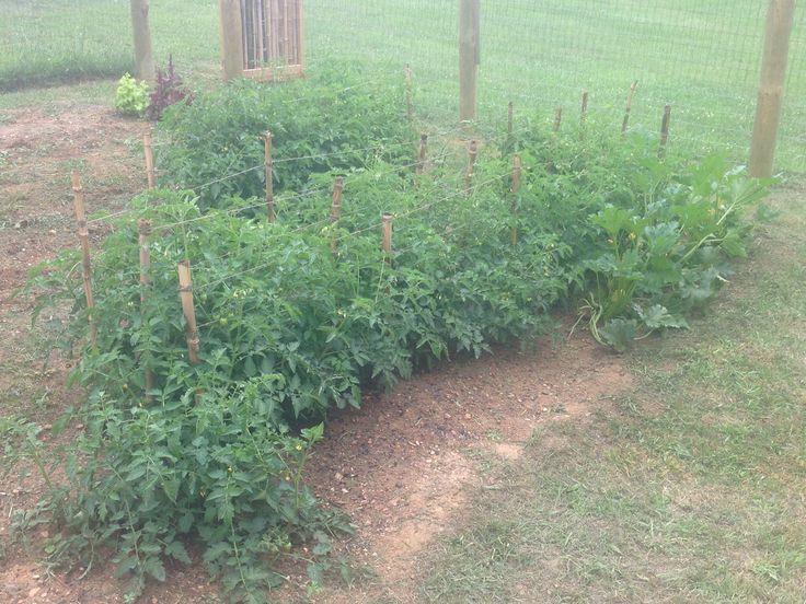 45+ tomato plants. Cherokee, heirloom, cherry