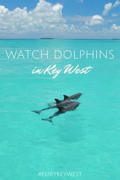 Enjoy a Key West Dolphin Watch and snorkeling in the Florida Keys backcountry with Fury Water Adventures. Great for families! #KeyWest #FuryKeyWest #Dolphins