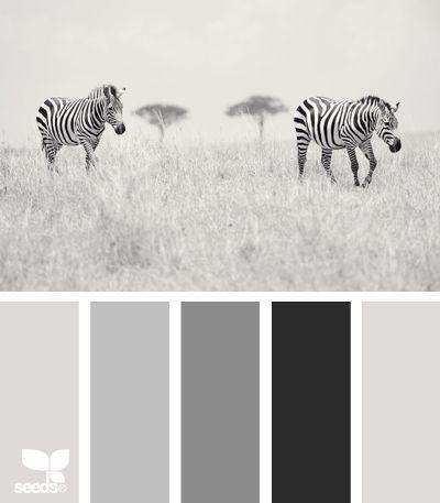 Design Seeds®   Gray's