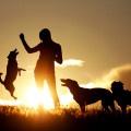 Hunde - Hundesport und Fotografie  http://hundesport-und-fotografie.jimdo.com/galerie/bilder/hunde/#