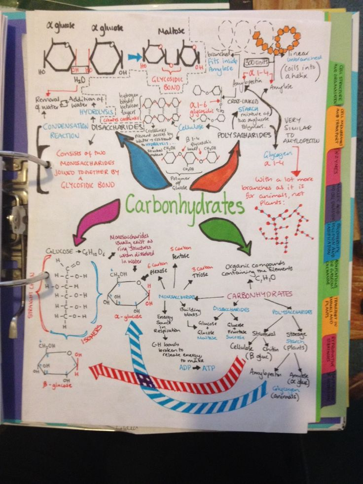 Finished my sum-up notes for Biological Molecules ☺️ I love how they look
