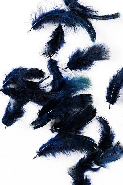 Perdrix - 3-7 cm - bleu nuit - Plumes.fr