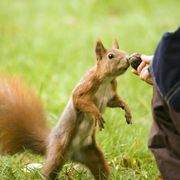 How to Make a Homemade Squirrel Call   eHow