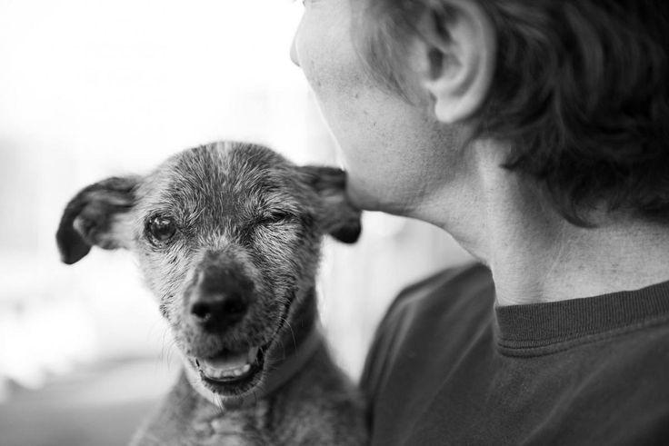 Las fotos con corazón de John Hwang: retratos en la perrera y en la calle, imágenes que salvan vidas   SrPerro.com, la guía para animales urbanos.