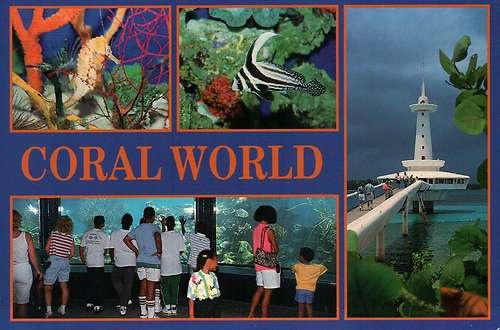 Coral World Underwater Observatory, Nassau, The Bahamas,Sea Creatures ...