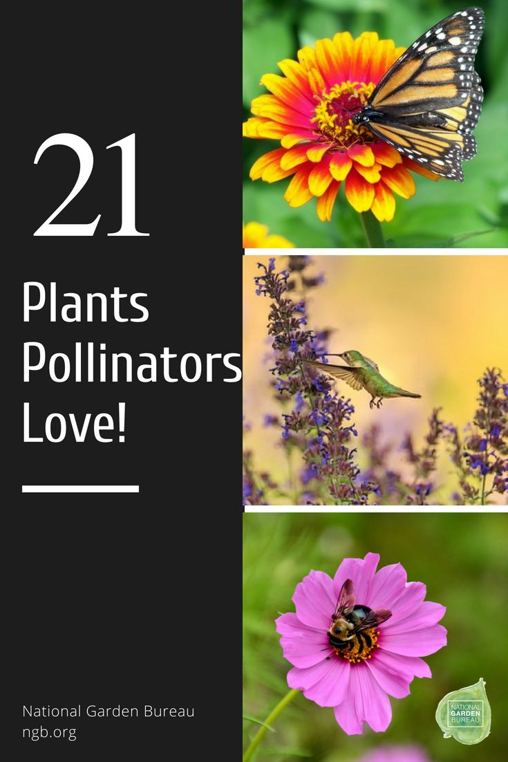 punishment important in plant pollinator relationship