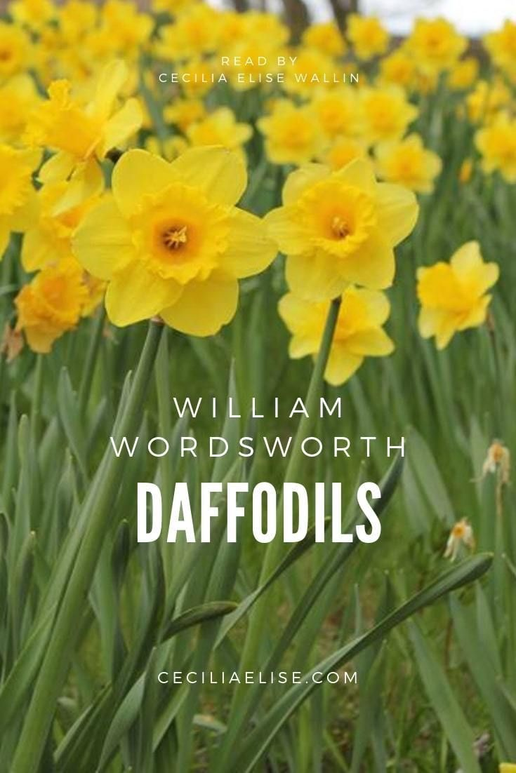 Daffodil William Wordsworth I Wandered Lonely A Cloud Relax Quote Daffodils Symbol