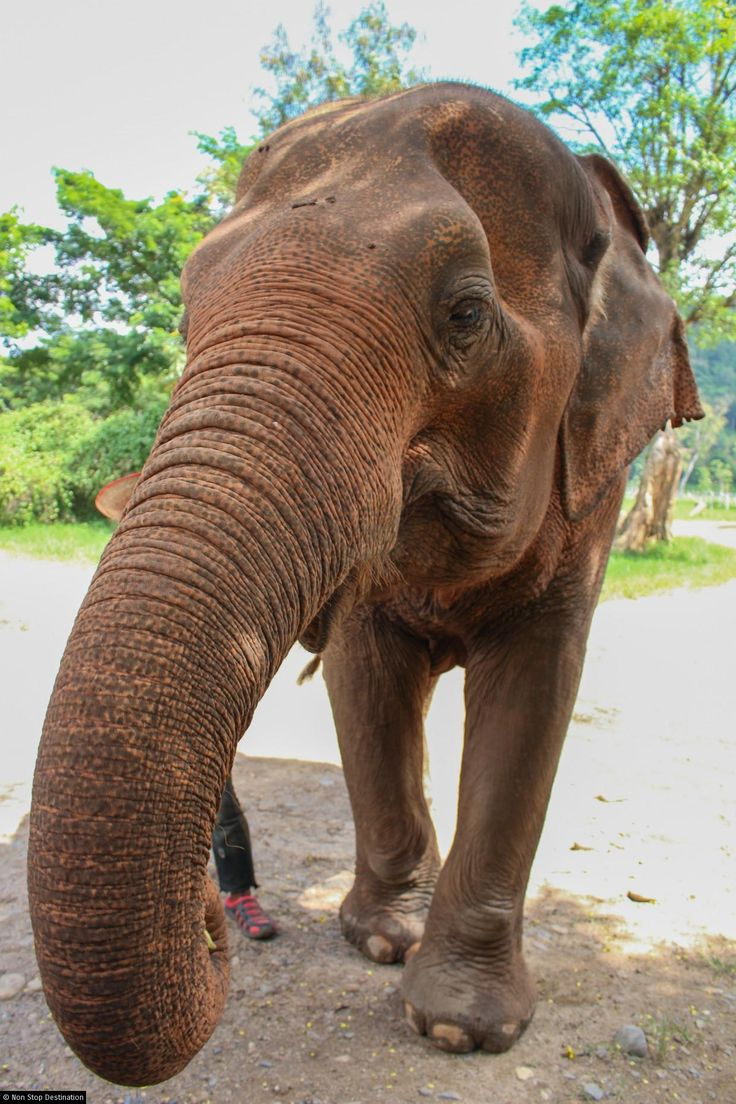 1000 id eacute es agrave propos de elephant nature park sur photo essay elephants at the elephant nature park