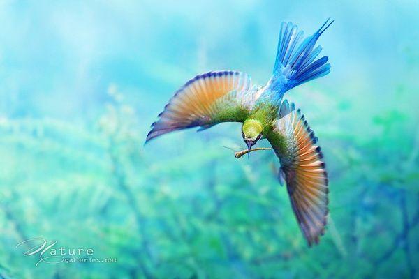Amazing-Bird-Photography-by-Sompob-Sasismit-14.jpg 600×400 pixels