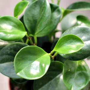 5 wonder plants to purify your air #MightyNest #EarthDay