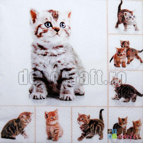 Servetele cu animale : Servetele - Multe pisicute - 33x33cm, 4 buc