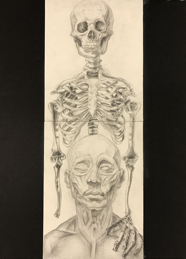 Skeleton and muscle guy I am taking Ap art this year, I hope I could get some feedback from you guys