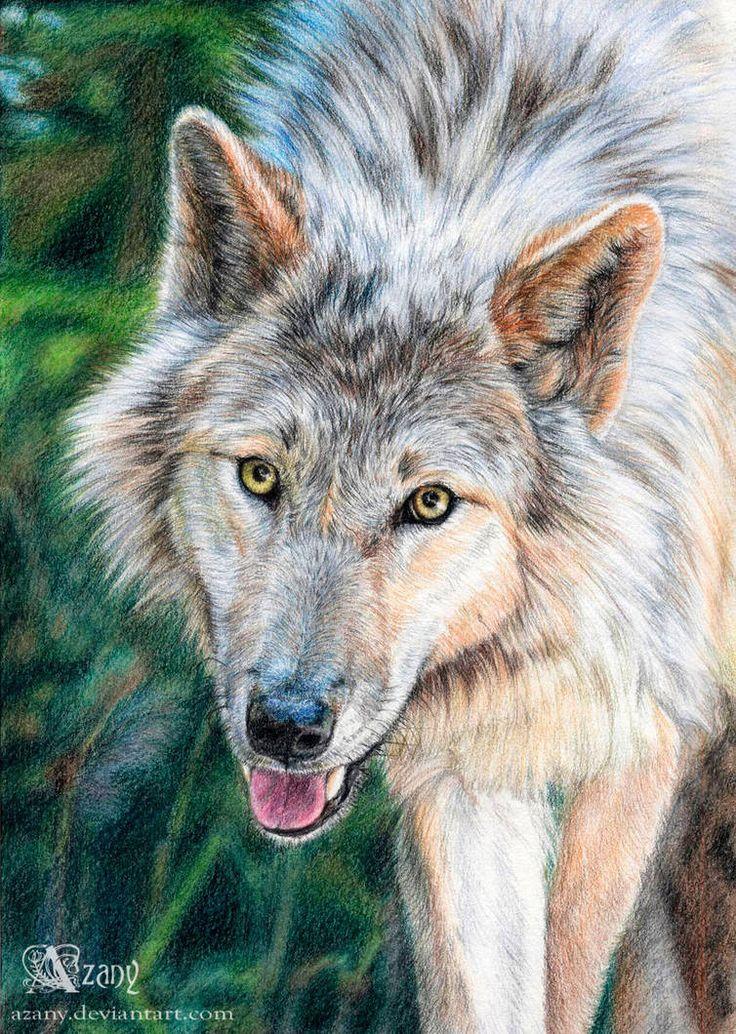 Фотографии волка с ну погоди касается первую