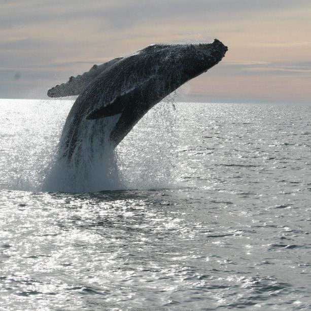 WHALE WATCHING in Puerto Penasco, Mexico