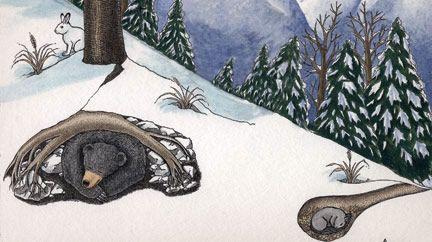 where do animals go in the winter?