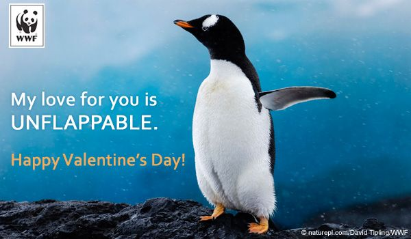 Send an eCard this Valentine's Day via World Wildlife Federation