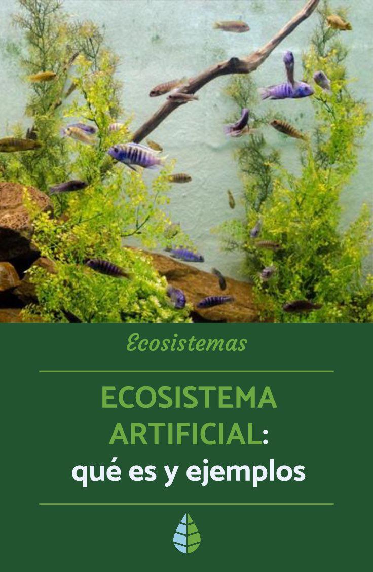 Ecosistema Artificial Qué Es Y Ejemplos Ecosistemas Tipos De Ecosistemas Ecosistema Natural