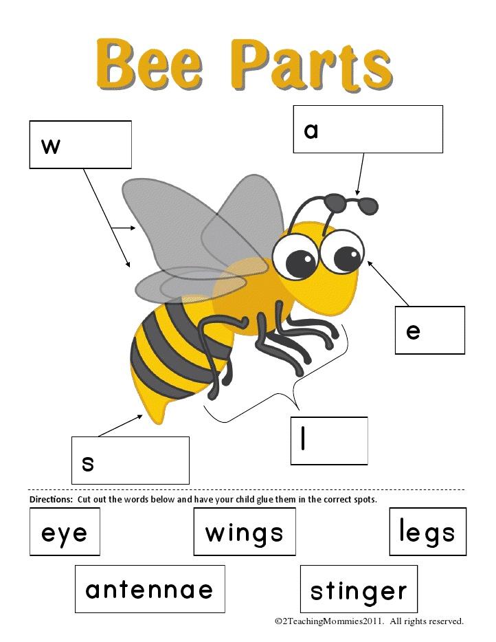 Parts de l'abella (imprimible)