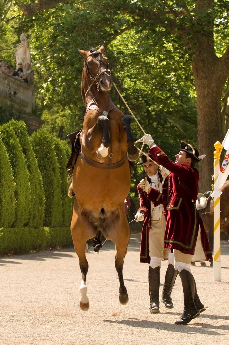 1000 Images About Wiener Hofreitschule Spanish Riding