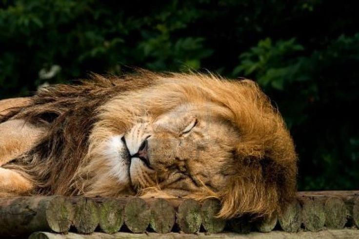 Sleepy you