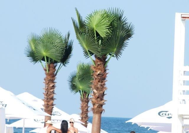 artificial palm trees for luxury beach - delivery and installation RobertoRossi.ro