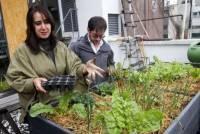 Mexico City's Green Revolution