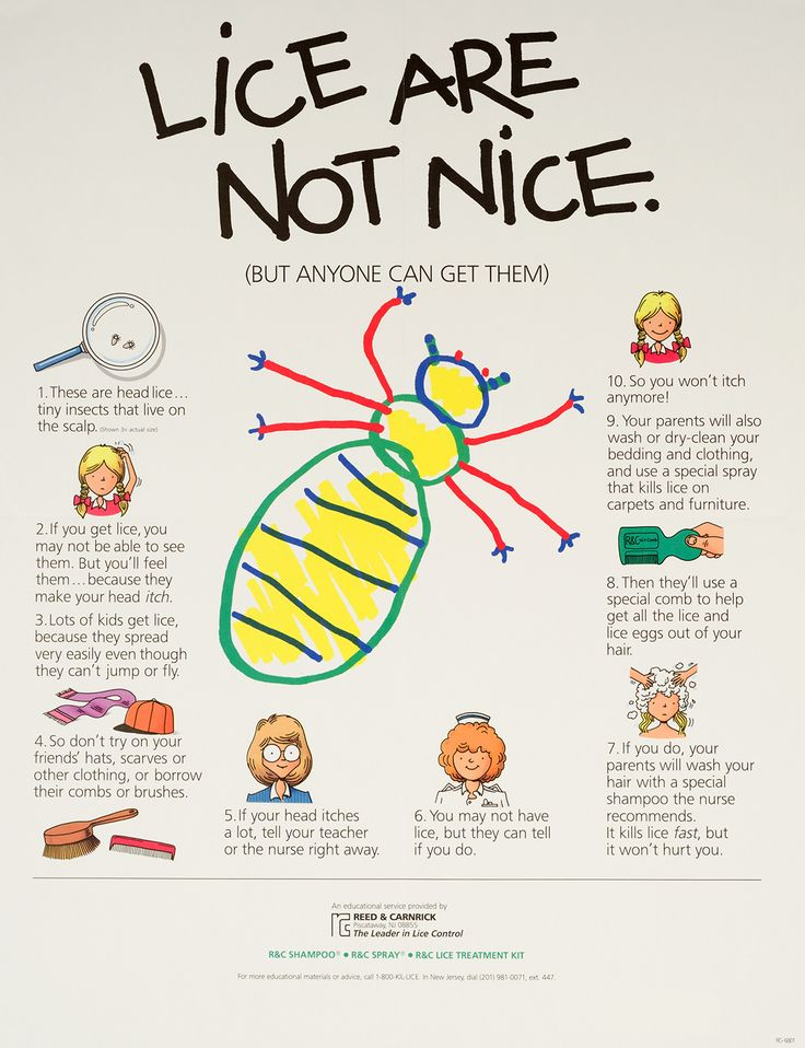Pictures how do you treat and prevent head lice - 25 Best Images About Head Lice Prevention On Pinterest