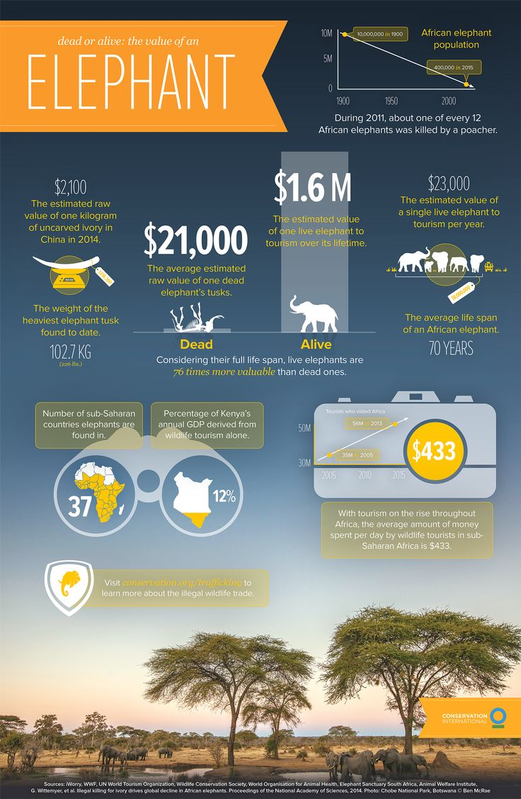 Dead or alive: The value of an elephant Infographic ...