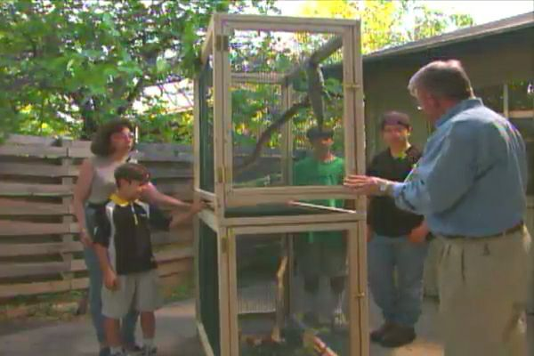 Learn how to build a reptile pet cage; includes step-by-step instructions along with tips, materials, and tools lists.
