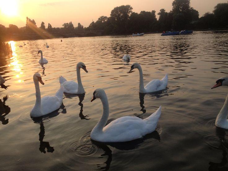 London's royal parks, hyde park at dusk