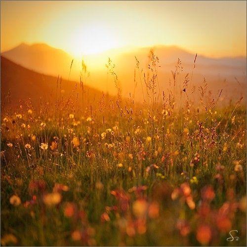 : Lights, God Creations, Ears Mornings, Dierks Bentley, Fields Flower, Summer Glow, Photo, Sun, Golden Hour