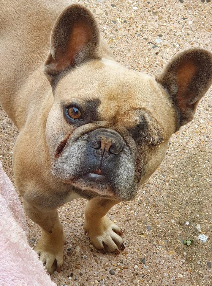 Yoda Guardian Angels Dog Rescue In 2020 Pfoten Partner