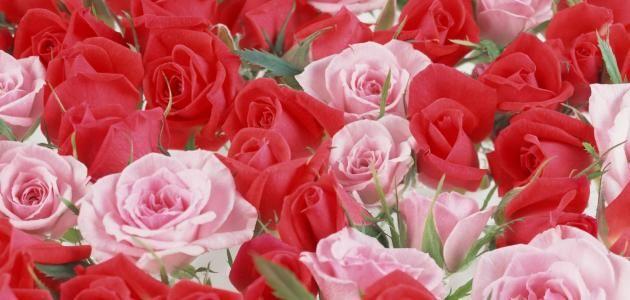 الورود روائح الورود أنواع الورود ومعانيها المراجع الورود ت عتبر الورود من أجمل النباتات التي خ ل قها الله فهو س لطان وم Beautiful Moon Flowers Plants