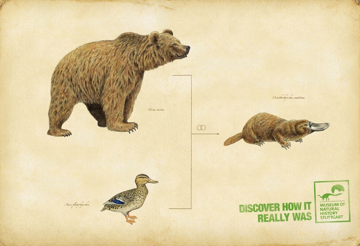 Evolution Platypus