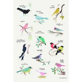 Poisson Bulle: Tinou Le Joly: Fugle plakat (40 x 60 cm)