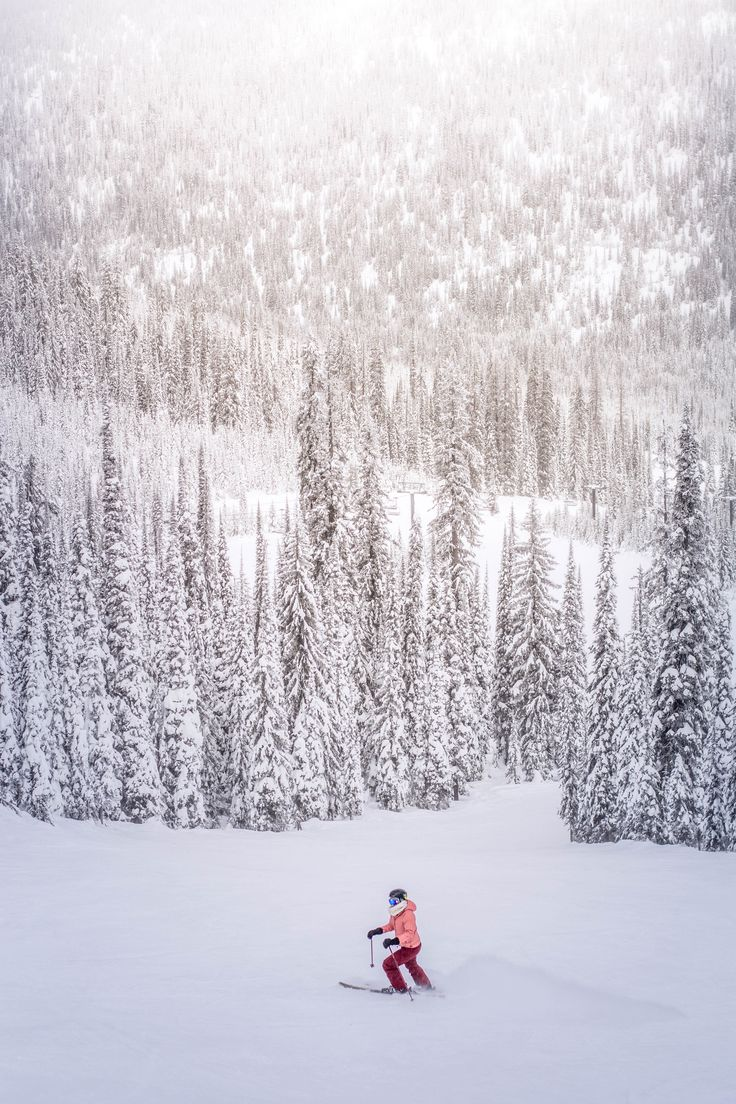 Off Piste Tree Skiing Snow Pictures Winter Photography Winter Images [ 1104 x 736 Pixel ]