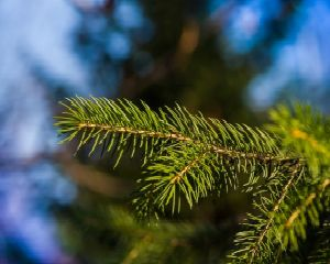 Tips on Keeping Your Christmas Tree Fresh Longer