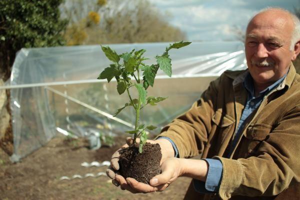 Les dix règles d'Hubert le jardinier pour obtenir des tomates