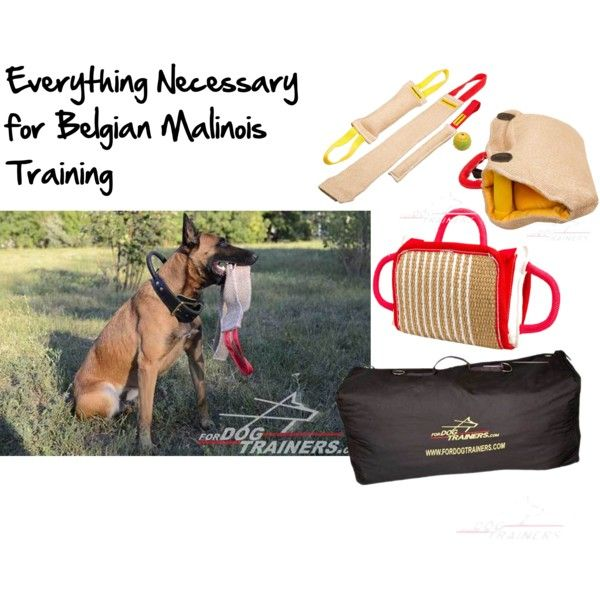 #Belgian #Malinois #Training by fordogtrainers on Polyvore