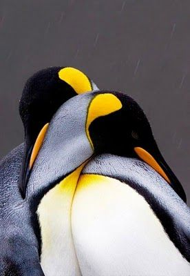 emperor penguins.....These animals have passion, purpose and promise. They are the prototype for excellent commitment and values.