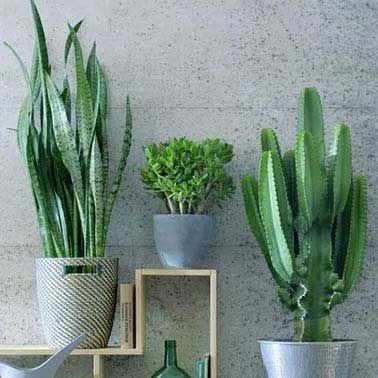 Binnenplanten & kantoorplanten online kopen ✅ Gratis verzending vanaf €50 in 1-2 dagen ✅ Vers van de kweker ✅ Grootste assortiment ✅ Zakelijk en particulier