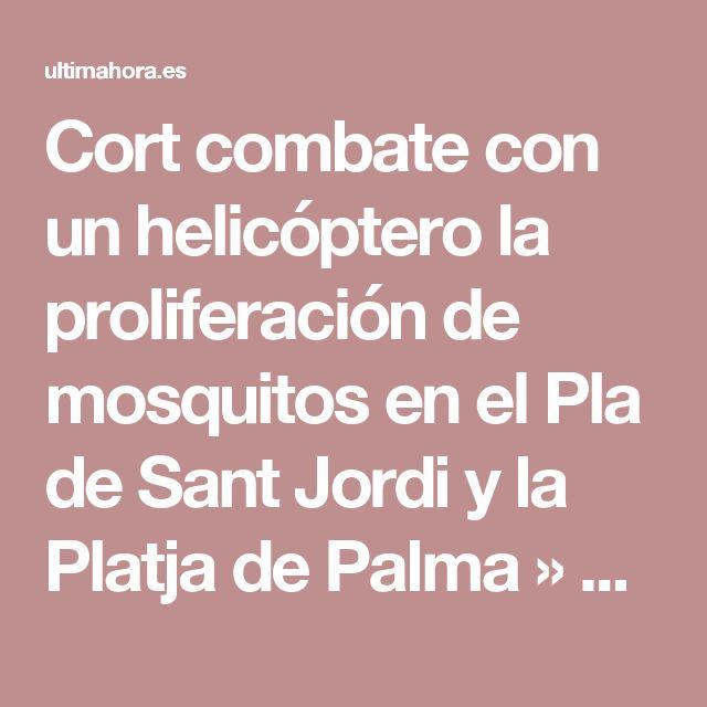 Cort combate con un helicóptero la proliferación de mosquitos en el Pla de Sant Jordi y la Platja de Palma » Local » Noticias » Ultima Hora Mallorca