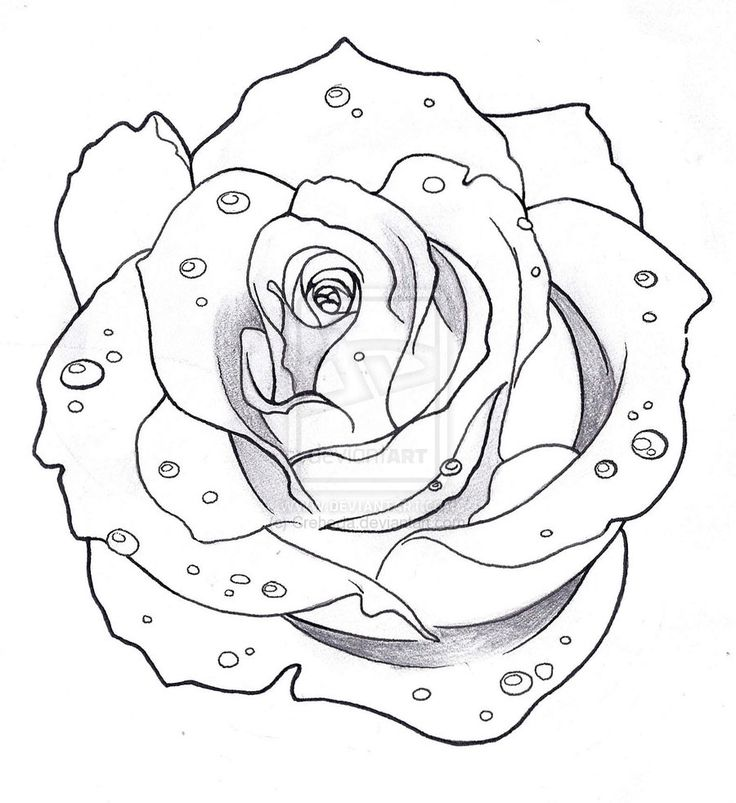 Line Drawing Rose Tattoo : Best traditional rose tattoo outline images on