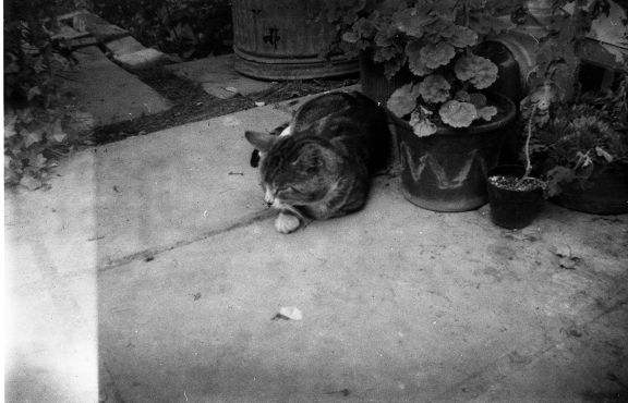 Kitty on Expired Film, from SimonH82 on Lomography
